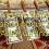 50 frigöra no deposit casino bonus på Adler Casino