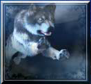 lobo místico selvagem